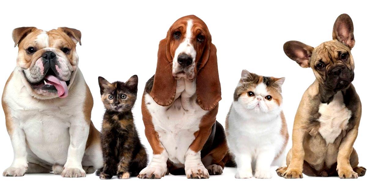 fidelizii-programa-para-pet-shop-1