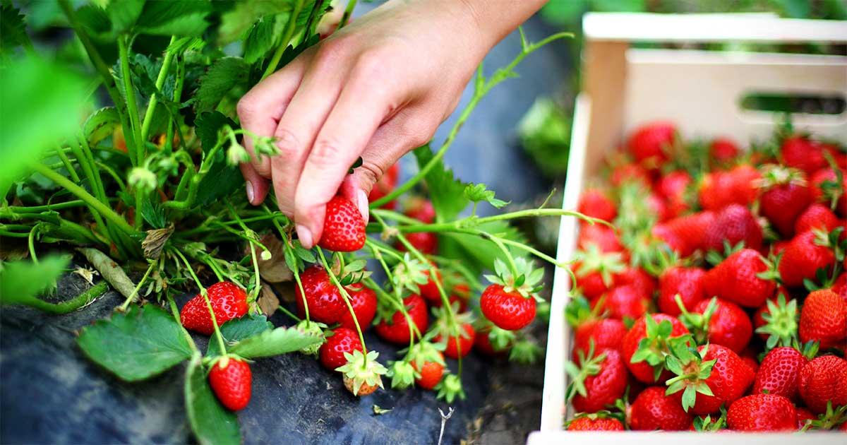 fidelizii-programa-de-fidelidade-para-loja-de-produtos-organicos-naturais-2