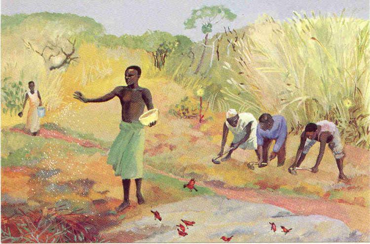 Mateus 13,1-23: A semente que cai em diferentes solos – Ildo Bohn Gass