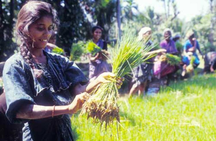 Agricultores familiares são os principais agentes para erradicação da fome