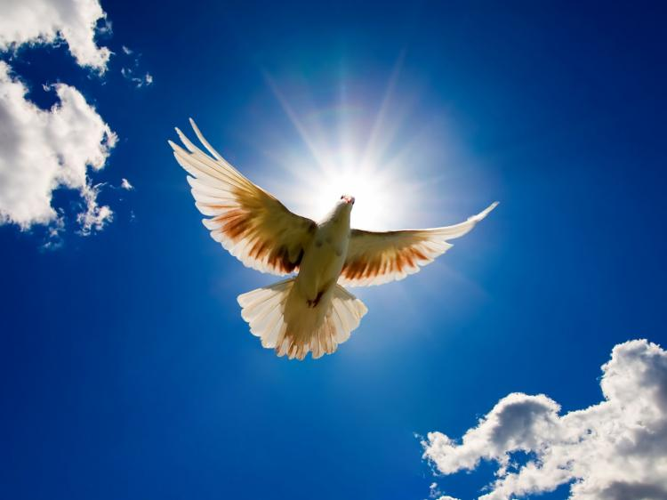 Salmo da Paz