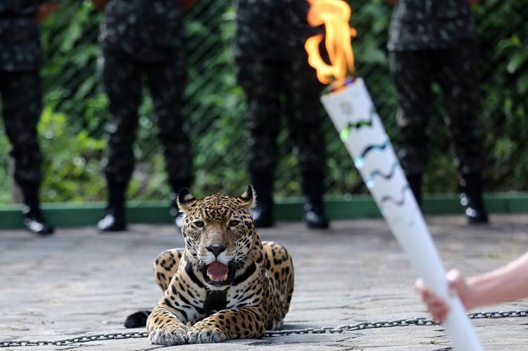 A cruel morte da onça Juma que envergonhou o comitê olímpico