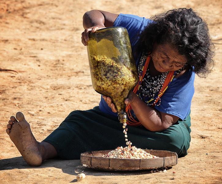 Festa do Milho Sagrado celebra a soberania alimentar e a resistência dos povos Guarani