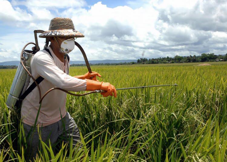 'Epidemia de câncer'? Alto índice de agricultores gaúchos doentes põe agrotóxicos em xeque