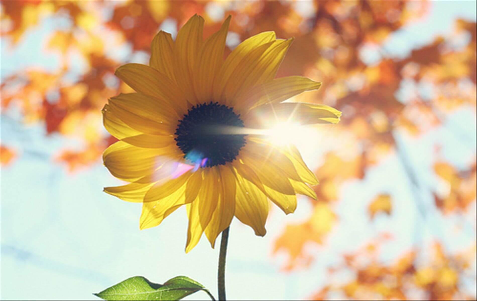 Será que não valemos muito mais que as flores e os pássaros?
