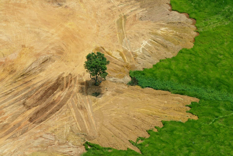 Taxa de desmatamento na Amazônia cresceu 16% entre 2014 e 2015. No ano passado, o resultado ficou 29% acima de 2015. (Foto de Custódio Coimbra)