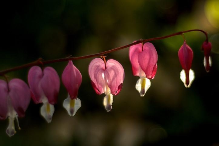 O amor é sempre surpreendente [Adroaldo Palaoro]