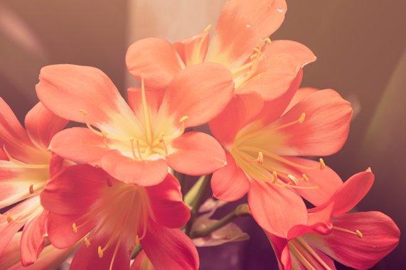 CEBI-RJ: Curso Flor e Canto acontece no final de janeiro
