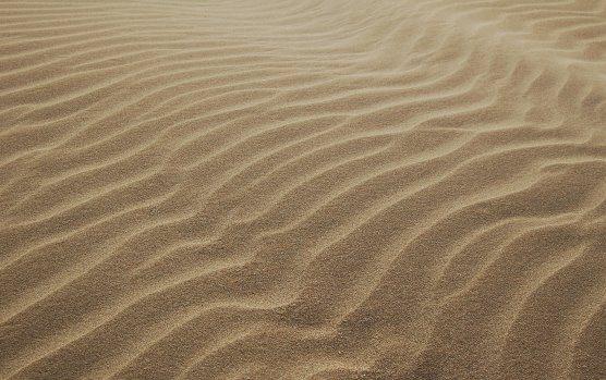 No deserto com as feras de hoje [Marcelo Barros]