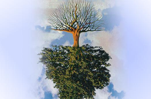 Meditação do evangelho: Eu sou a videira, vocês são os ramos