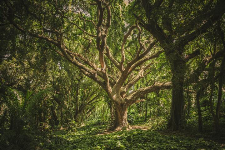 Evangelho da semana: Ecologia interior