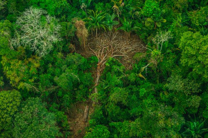 Como ruralistas e grandes corporações estão destruindo a Amazônia