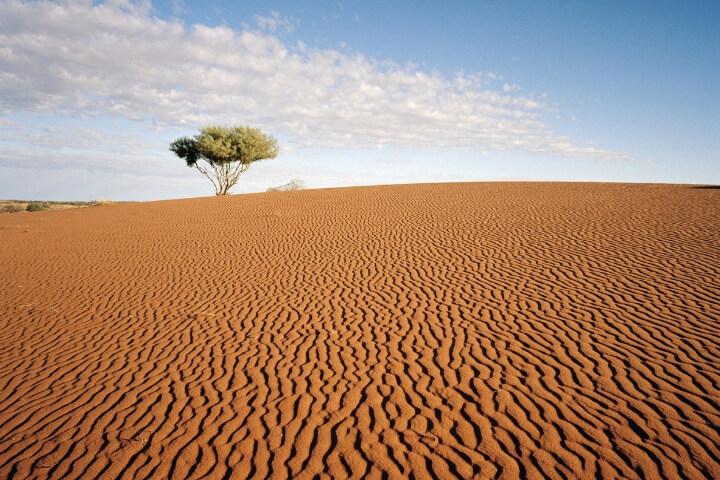 O deserto portador de Vida