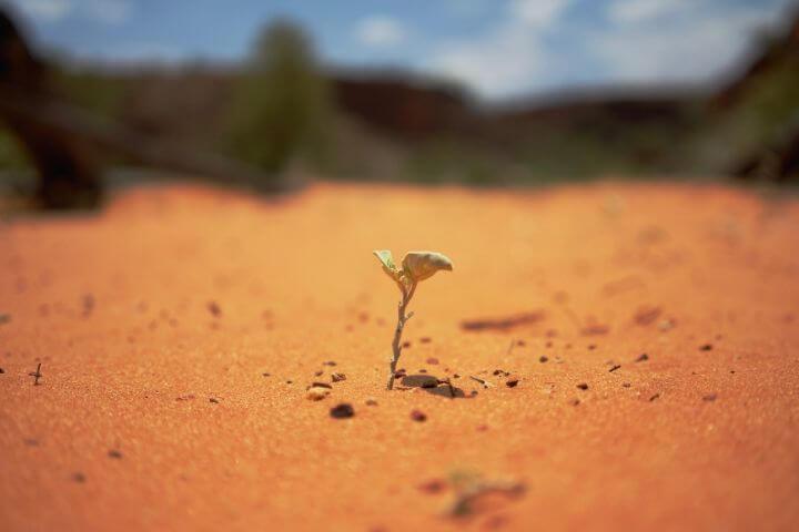 Comentário do evangelho: A vida nasce aonde menos se espera…