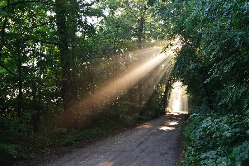 Reflexão do Evangelho: O que Jesus vê nas multidões? Elas estavam cansadas e desgarradas