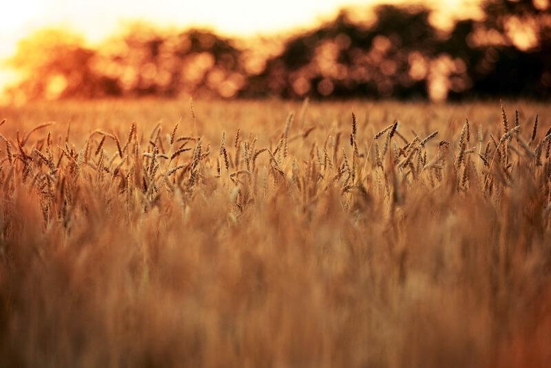 Reflexão do Evangelho: Quem tem ouvidos para ouvir, ouça!