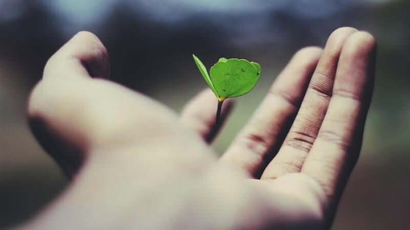 Reflexão do Evangelho: Livres e responsáveis pelos nossos atos