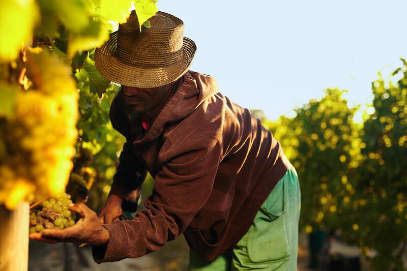 Reflexão do Evangelho: A vinha é boa… Os chefes é que são ruins