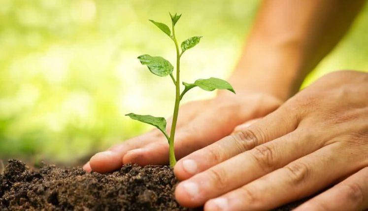 CNBB convida brasileiros a plantarem uma árvore no Dia de Finados