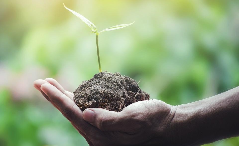 Igrejas evangélicas fazem plantio de árvores pelo Brasil