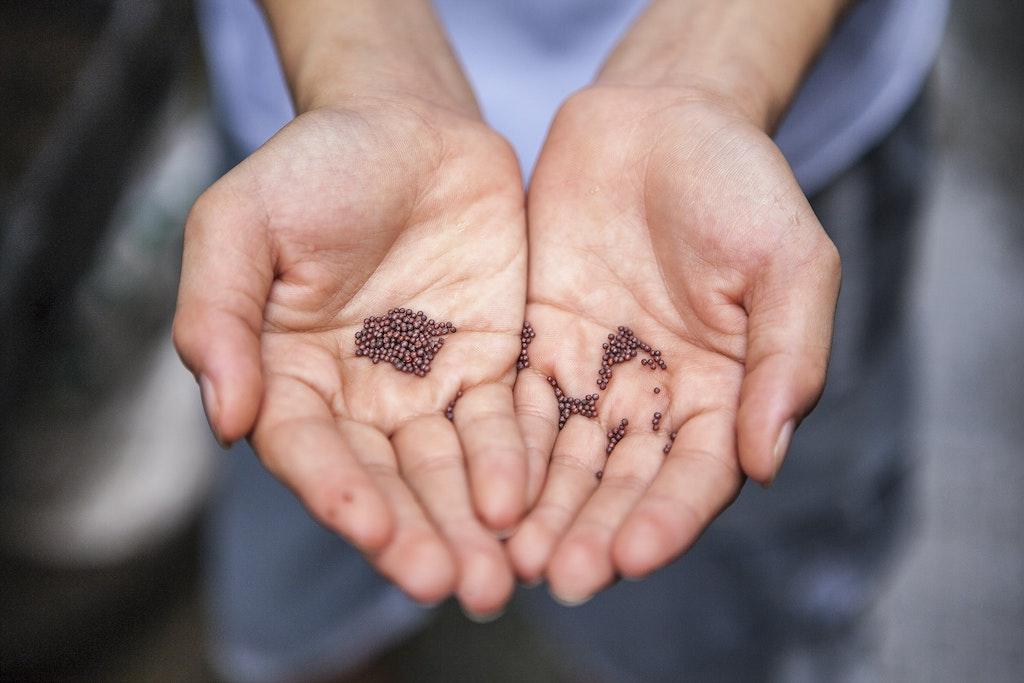 A semente da nova comunidade