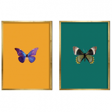 Set De Quadros Glasswinged