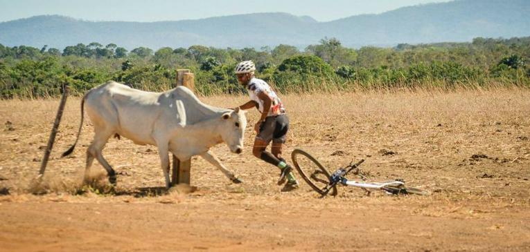 Ciclista é atacado por vaca no TO