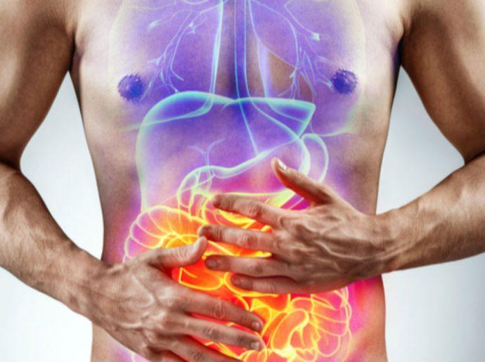 Ilustração do intestino do ser humano