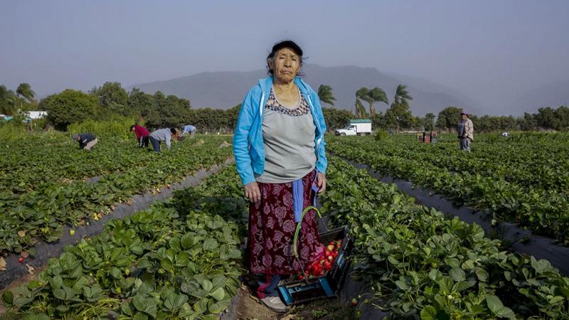 Lanzarán un plan de promoción y protección del trabajo rural registrado – Titulares de Política