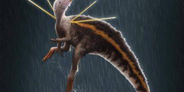 Museo de Alemania se niega a devolver fósil de dinosaurio extraído ilegalmente de Brasil – 09/12/2021 – Ciencia / Brasil