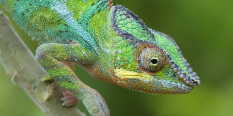 Investigadores surcoreanos crean una 'piel' artificial similar a un camaleón – 13/09/2021 – Ciencia / Brasil
