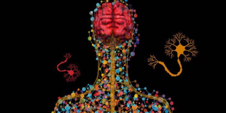 ¿Neurocirugía cosmética para una mente mejor?/ Titulares