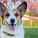 Video viral: una mujer adiestró a su perro para que le lleve el papel higiénico al baño – Titulares