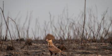 El abandono ambiental en la peor sequía del siglo transforma el interior de São Paulo en algo peor que Mordor – 18/09/2021 – Reinaldo José Lopes / Brasil