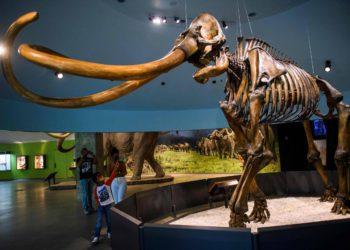 ¿Es posible 'resucitar' mamuts para luchar contra el cambio climático?  – 19/09/2021 – Medio ambiente / Brasil