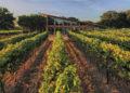 Guía de viajes de vinos de Texas – Decanter / Titulares de Vinos y Bodegas