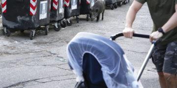 Basta !, los romanos dicen basta de la invasión de jabalíes en la ciudad / Titulares de Noticias de China