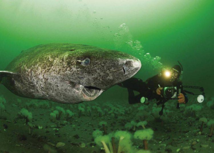 Este tiburón tiene 400 años, nació cuando los piratas del Caribe dominaban los mares | Life