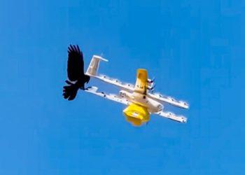 Video: cierran un servicio de delivery con drones en Australia por ataques de pájaros / Titulares de Tecnología