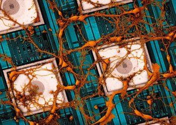 """Samsung quiere """"copiar y pegar"""" datos de nuestro cerebro en chips / Titulares de Tecnología"""