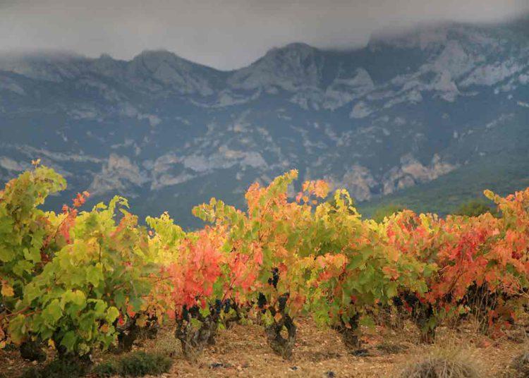 Control de plagas: lucha contra las enfermedades en los viñedos de Rioja / Titulares de Vinos y Bodegas