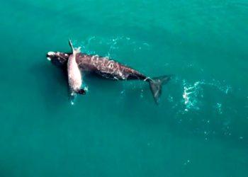 El calentamiento del océano afecta a la supervivencia de las ballenas/ Titulares de La atagonia