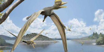 Estudio muestra cómo los pterosaurios desarrollaron el vuelo con la eficiencia de los aviones – 20/10/2021 – ciencia / Brasil