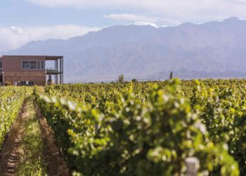 Vinos Rutini: innovación y experiencia ejemplares en Gualtallary / Titulares de Vinos y Bodegas