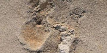 Las huellas prehistóricas que cuestionan las ideas sobre el origen de la humanidad – 21/10/2021 – Ciencia / Brasil