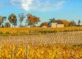 Château Guiraud obtiene un nuevo propietario mayoritario en Sauternes / Titulares de Vinos y Bodegas