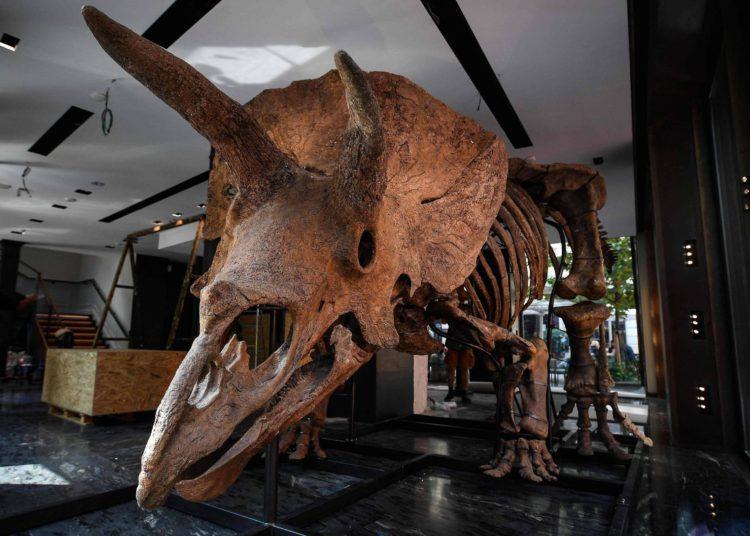 El esqueleto de Triceratops 'Big John' es subastado por $ 7.7 millones – 22/10/2021 – Ciencia / Brasil
